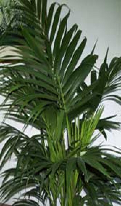 Le piante arredano